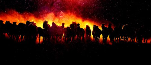 Blazing Group Of Horses Running - Stock Photos, Pictures & Images