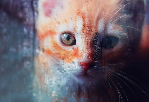 Sad Kitty Cat Stock Photo - Stock Photos, Pictures & Images