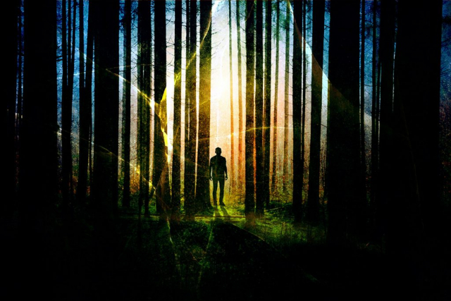 Surreal Apocalyptic Woods 01 - Stock Photos, Pictures & Images